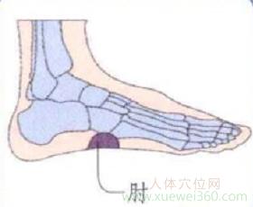 脚底穴位图(足内侧反射区)--肘位置