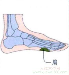 脚底穴位图(足内侧反射区)--肩位置