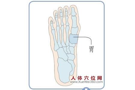 脚底穴位图(脚底反射区)--胃位置