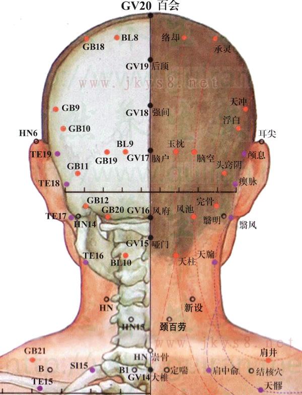 头部背面穴位高清彩图