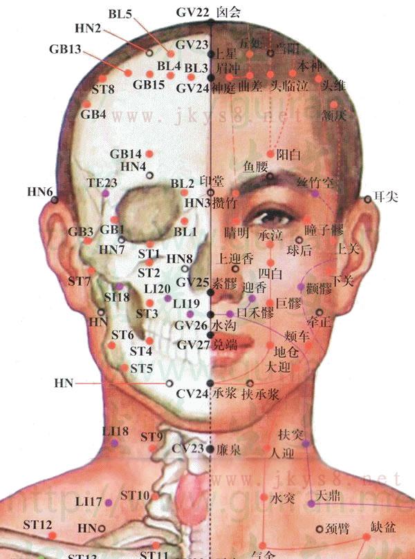 头部正面穴位高清彩图图