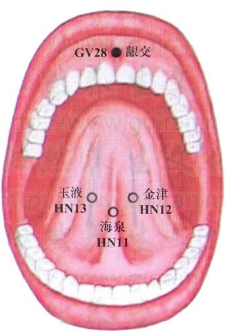 口内穴位高清彩图