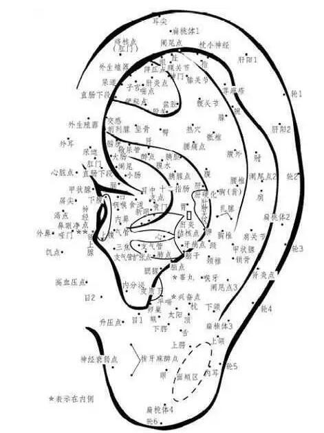 耳部穴位反射区