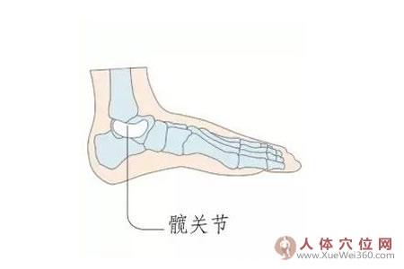 足内侧反射区–髋关节
