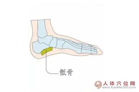 足内侧反射区–骶骨