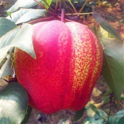 女人养生,推荐三种水果,润肠通便,缓解疲劳,增强免疫力