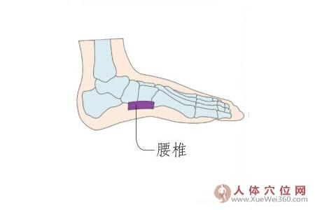 足内侧反射区–腰椎