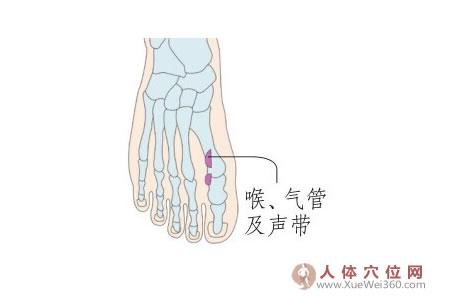 脚底穴位图(足内侧反射区)--喉、气管及声带