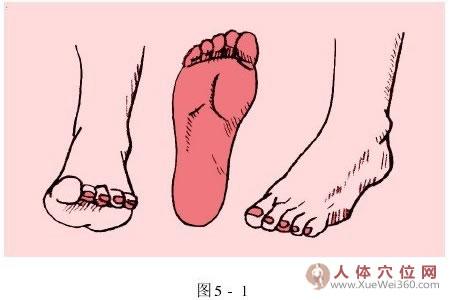 家庭按摩百科大全:脚底反射区按摩