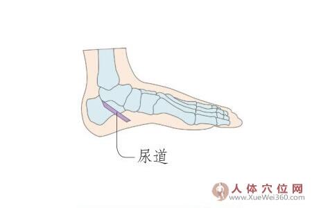 足部尿道反射区图