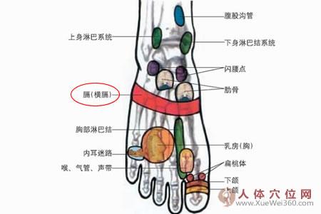 脚背的横膈膜反射区