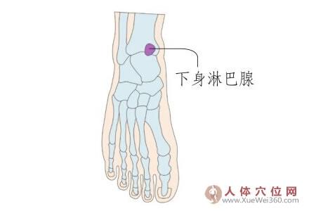脚底穴位图(足内侧反射区)--下身淋巴腺位置
