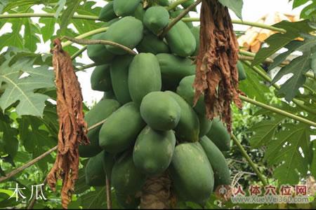 木瓜药材图