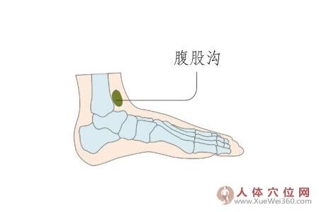 足内侧反射区–腹股沟