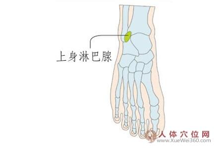脚底穴位图(足内侧反射区)--上身淋巴腺位置