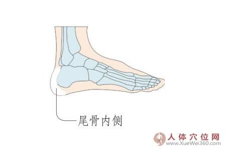 足内侧反射区–内尾骨