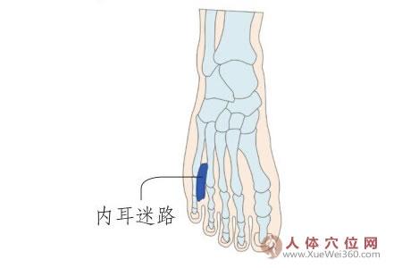 脚底穴位图(足内侧反射区)--内耳迷路位置