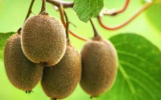 猕猴桃的营养成分