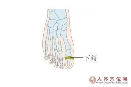 足背反射区:下颌