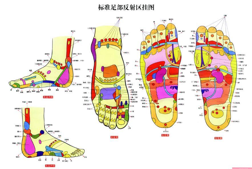 脚底穴位图:脚底对应的器官图