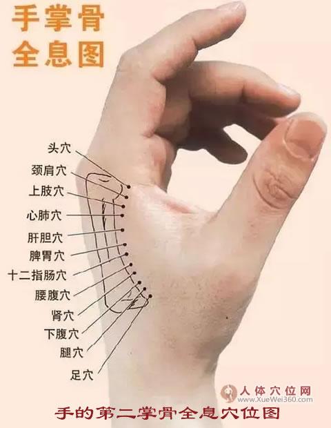 手的第二掌骨侧全息穴位图