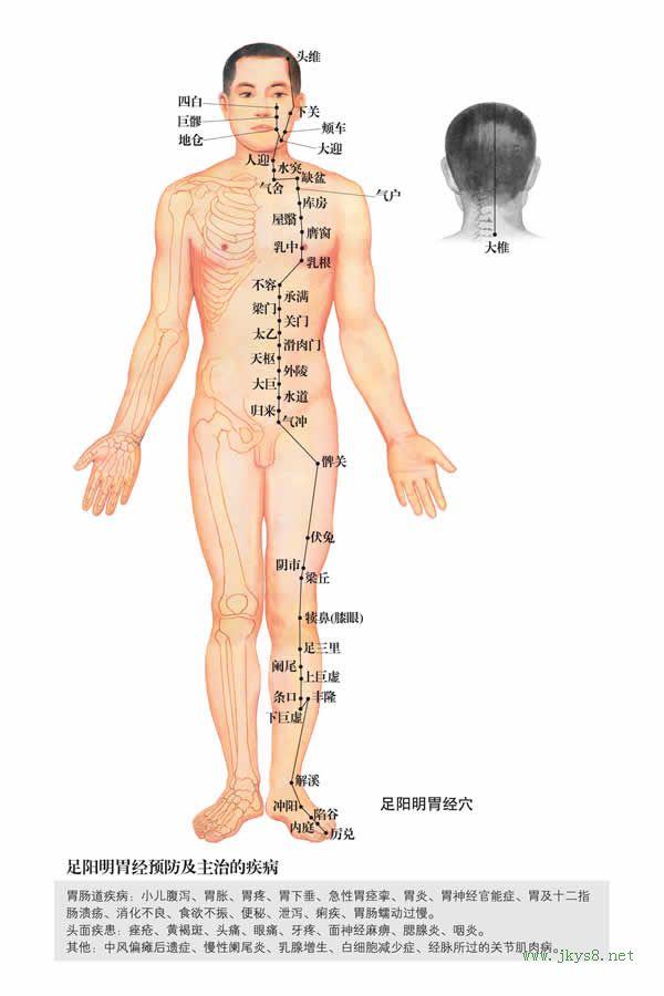四白穴:胃经(图文)