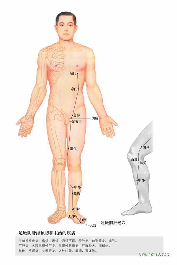 膝关穴:肝经 (图文)