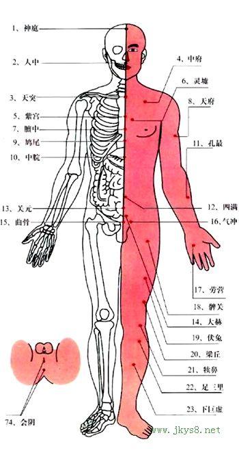人体特效穴位(图)