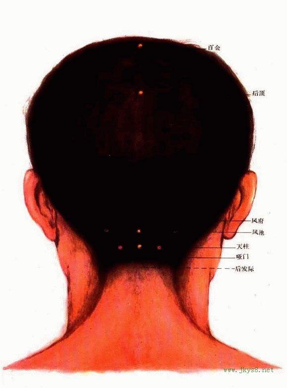 头部背面穴位图-人体穴位图大全-按身体部位查询(图文)