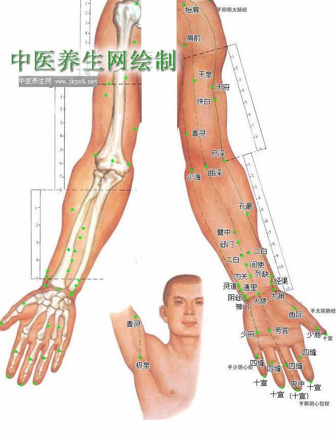 上肢内侧穴位高清彩图