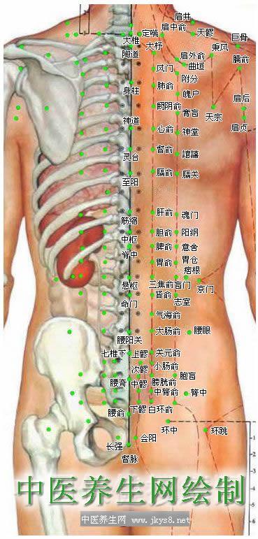 人体背部穴位图-人体穴位图大全-按身体部位查询(图文)