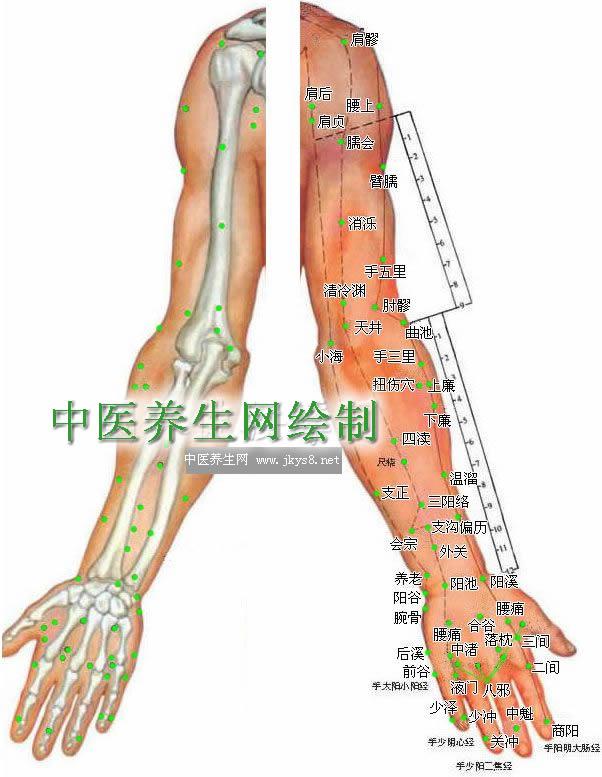 上肢外侧穴位高清彩图