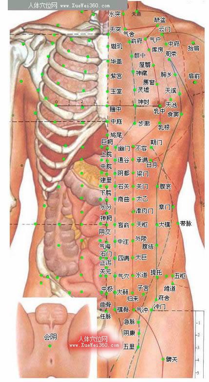 胸部腹部穴位图-人体穴位图大全-按身体部位查询(图文)