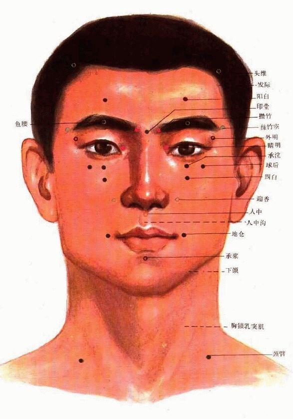 头部正面穴位图-人体穴位图大全-按身体部位查询(图文)