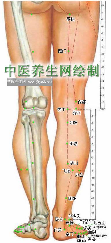 下肢背面穴位图-人体穴位图大全-按身体部位查询(图文)