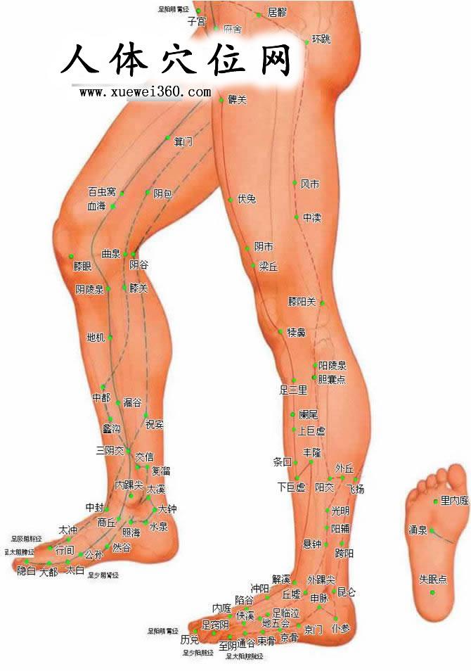 下肢外侧穴位高清彩图