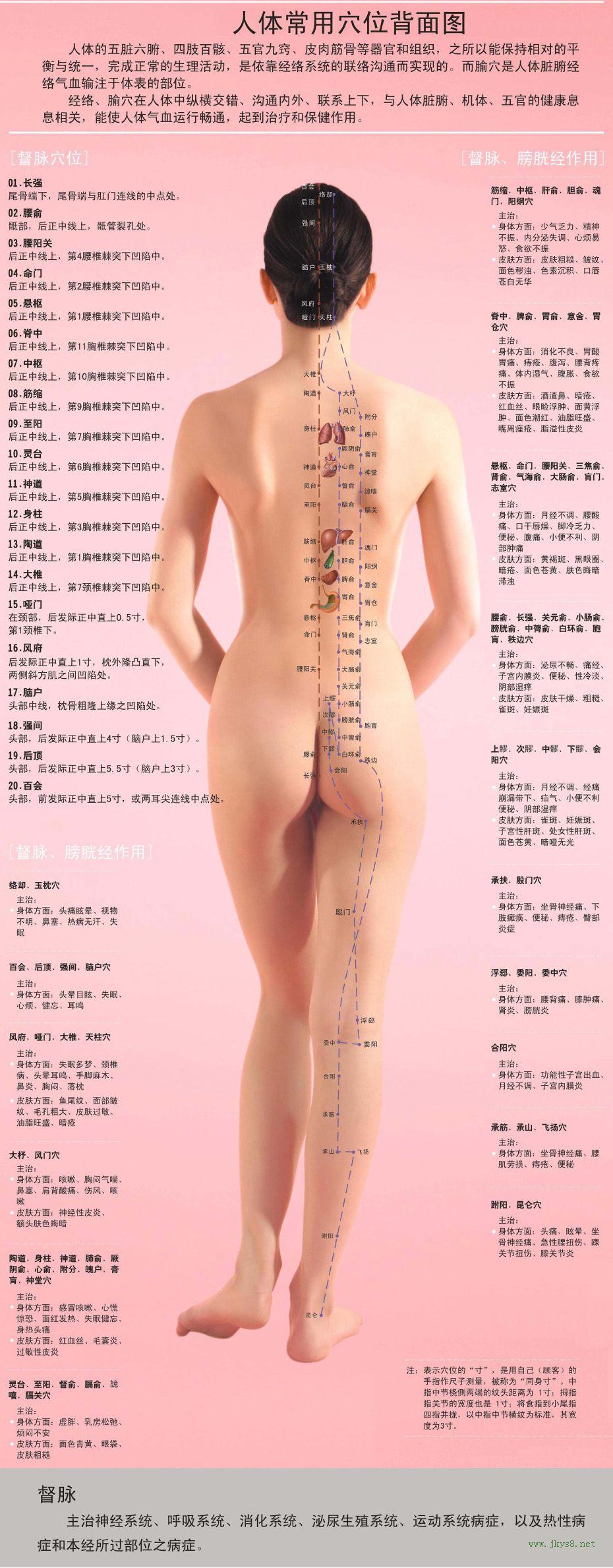 女性人体穴位图解大全【背面高清图下载】