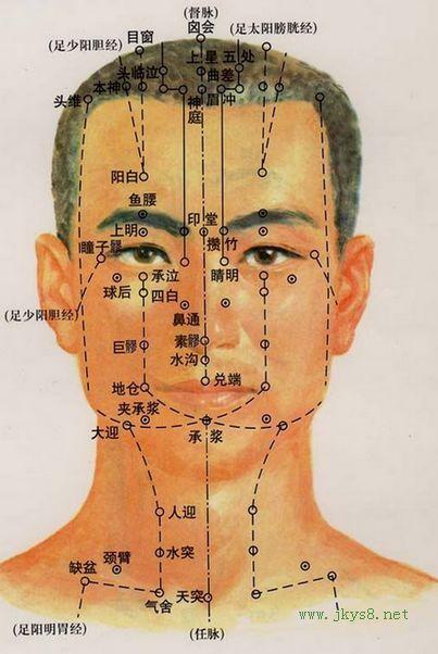 鱼腰穴位位置图-人体穴位查询