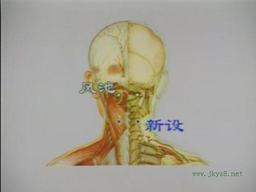 新设穴位置图-人体穴位查询