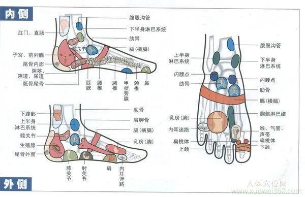 脚部内侧外侧反射区图