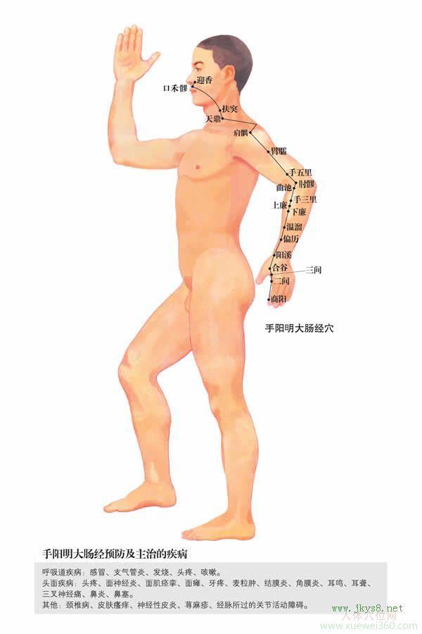 迎香穴:大肠经(图文)