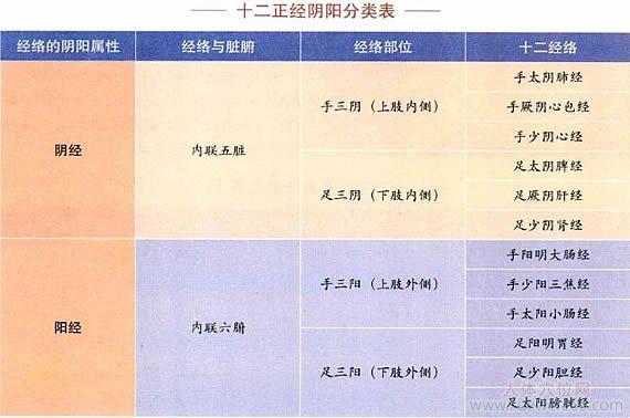 十二正经阴阳分类表