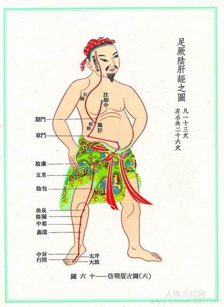 肝经经络图