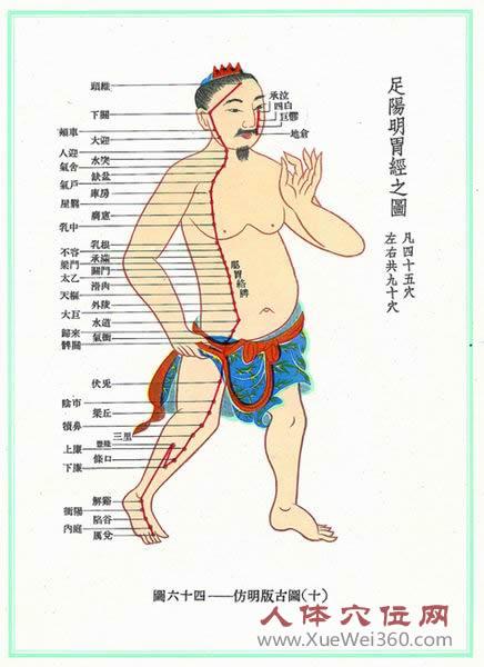 足阳明胃经经络图