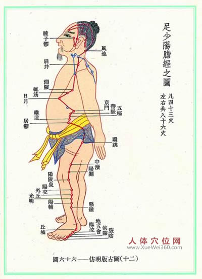 胆经经络图
