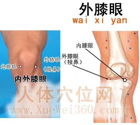 外膝眼穴的准确位置图