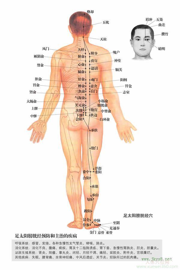 魄户穴:膀胱经(图文)