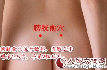 膀胱俞穴位位置图