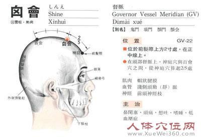 囟会穴解剖图