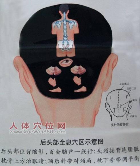 头部全息穴区示意图